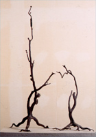 Iron tree (Yuki / orange tree)